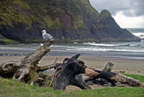 Seagull and Driftwood by Sally White