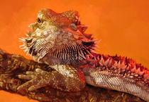 Bearded Dragon von seinstheorie