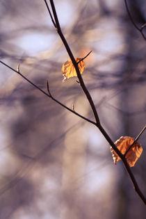 Herbstblätter in Frühlingssonne II von sylbe