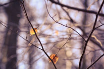 Herbstblätter in Frühlingssonne I von sylbe