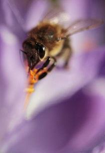 Biene im Glück von Johanna Leithäuser