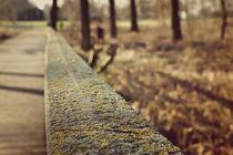 Holzbrücke im Wald by leddermann