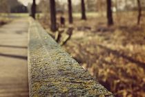 Holzbrücke im Wald von leddermann
