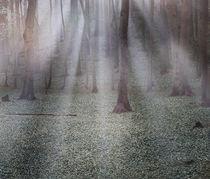 Morgenwald von © Ivonne Wentzler