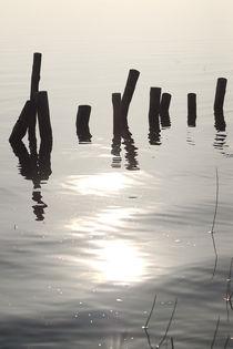 Pfähle im Wasser von dresdner