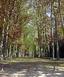 Versailles Gardens Path by Sally White