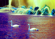 Swans in the Versailles Gardens 2 by Sally White