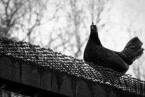 The Bird von sylbe