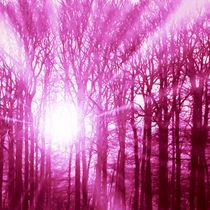 Wald von ndsh