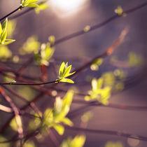 Frühling by sylbe