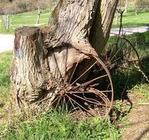 'A Tree's wheeled Walkers' von Juergen Seidt