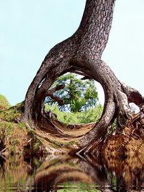 Wonder Of Nature von Irfan Gillani