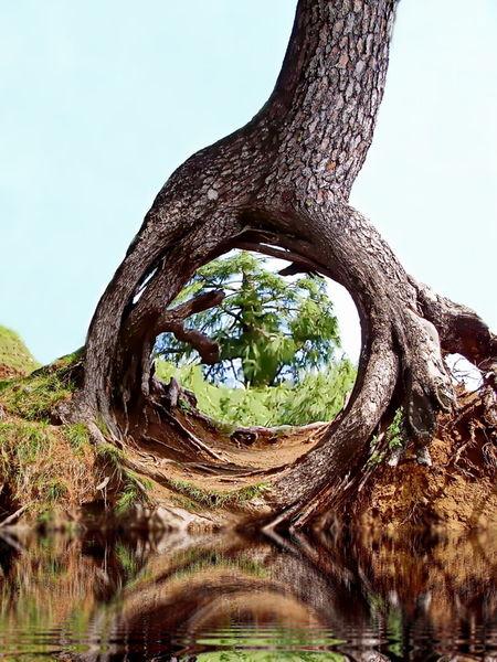 Wonder-of-nature
