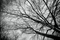 Der Baum - the tree von leddermann