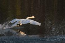Landung by Andrea  Hergersberg