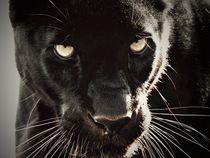 Leopard Stare by Deniece Platt