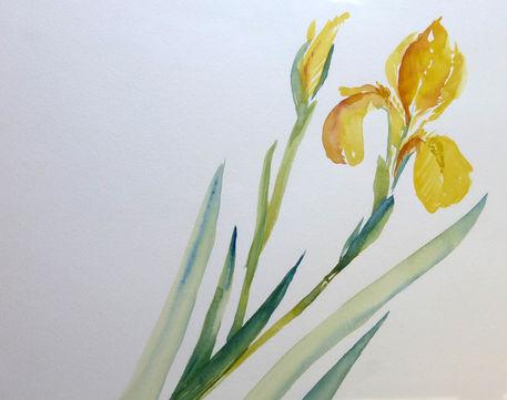 Malen-am-meer-iris-gelb-aquarell