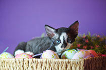 Dsc8144-dot-drx-kitten8-03-14