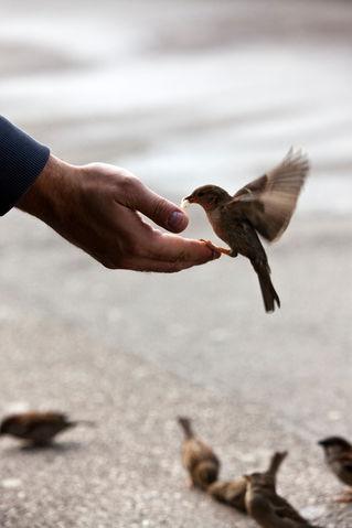Bird-1208