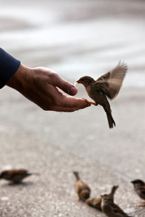 Bird feeding hand by creativemarc