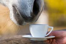 Coffehorse