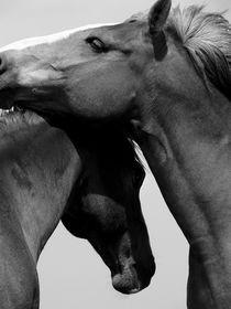 HorsePlay von Mel Stone