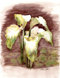 Green Goddess Calla Lilies by Linda Ginn