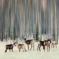 caribou and trees von Priska  Wettstein