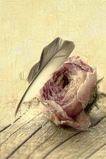 Vintage Rose von lightart