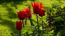 Frühlingsboten von lucylaube