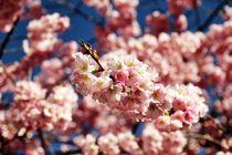Flowers by Luisa Azzolini