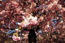 Flowers von Luisa Azzolini