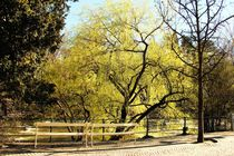 Tree von Luisa Azzolini