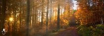 Sonnenschein im Wald II by mk-fotoart