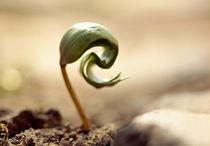 Growing is hard work - Wachsen ist harte Arbeit by Johanna Leithäuser