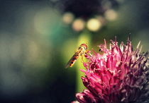 Flower and flower fly :-) von Johanna Leithäuser