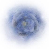 Wh-spil-090211-59-blue-rose