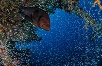 Unterwasser-bisboss