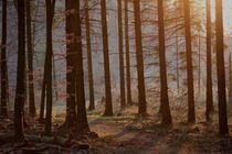 """Forest """"Bergisch"""" by © Ivonne Wentzler"""
