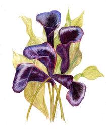 Black Forest Calla Lilies by Linda Ginn