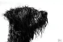 nasser hund von ndsh