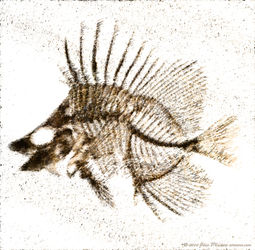 Fossilized-fish