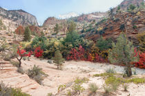 Red Leaves At Zion National Park by John Bailey