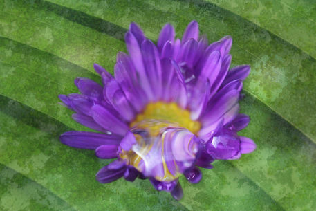 Img-aster
