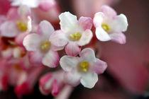 Winterblüte von lightart