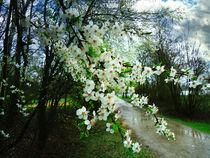 Springtime von florin