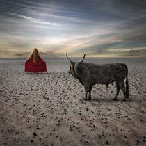 Torrero by Dariusz Klimczak