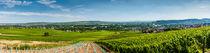 Panorama Ingelheim bis Rüdesheim von Erhard Hess