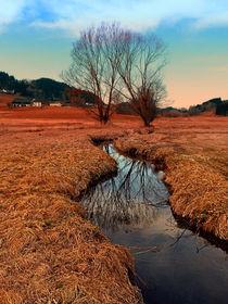 Bach, Bäume, Spiegelungen | Landschaftsfotografie by Patrick Jobst