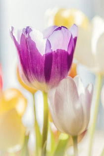 Tulips by Beate Zoellner